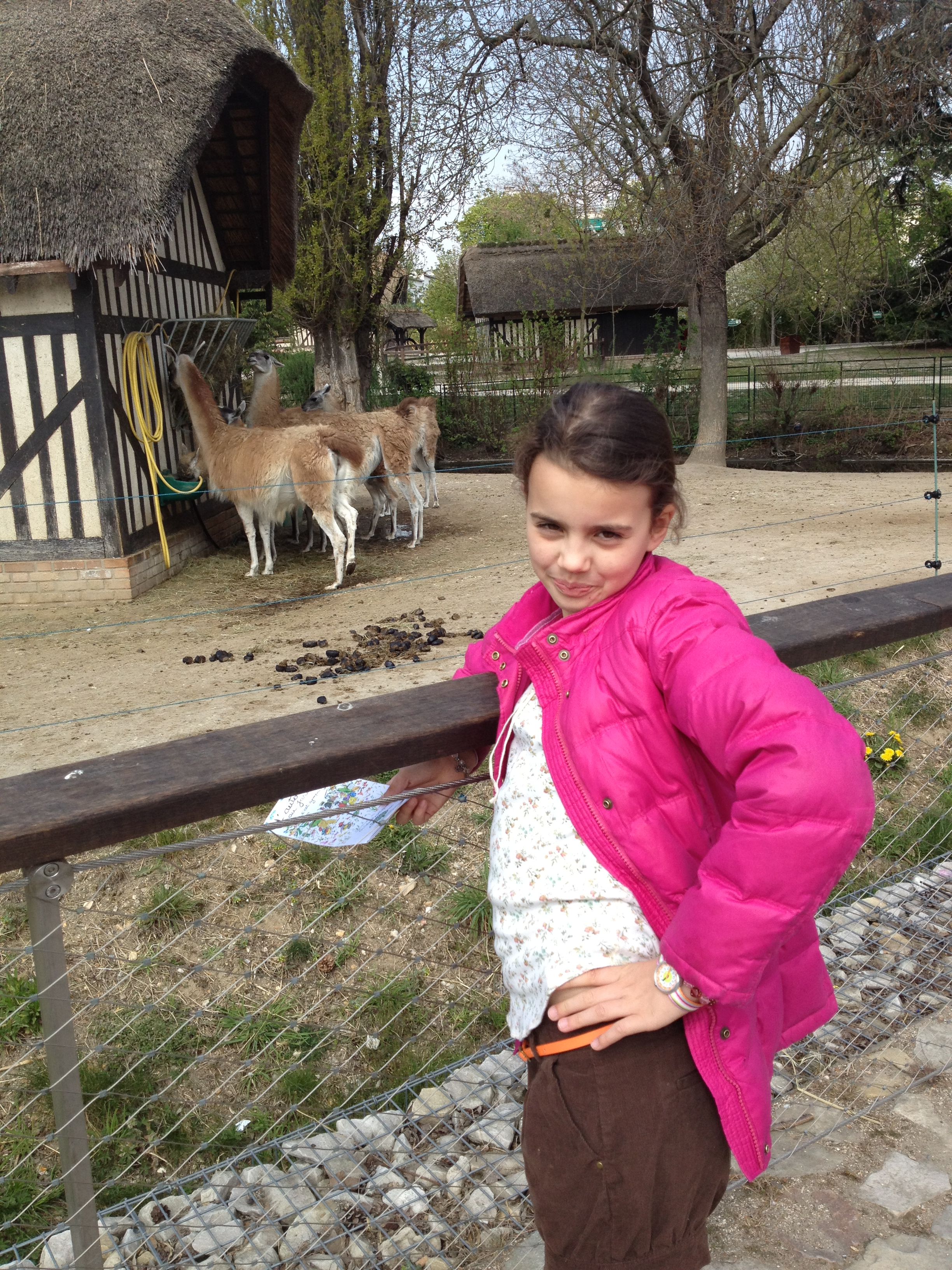 Young girl in front of llama pen in the Jardin d'Acclimatation in Paris